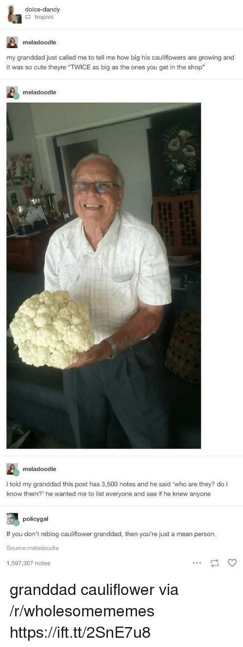 """cauliflower: dolce-dandy  tropivs  meladoodle  my granddad just called me to tell me how big his cauliflowers are growing and  it was so cute theyre """"TWICE as big as the ones you get in the shop""""  meladoodle  meladoodle  i told my granddad this post has 3,500 notes and he said 'who are they? do i  know them? he wanted me to list everyone and see if he knew anyone  policygal  If you don't reblog cauliflower granddad, then you're just a mean person  Source:meladoodle  1,597,307 notes granddad cauliflower via /r/wholesomememes https://ift.tt/2SnE7u8"""