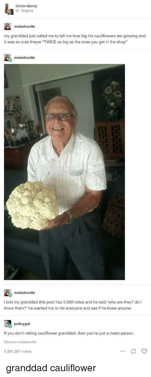 """dolce: dolce-dandy  tropivs  meladoodle  my granddad just called me to tell me how big his cauliflowers are growing and  it was so cute theyre """"TWICE as big as the ones you get in the shop""""  meladoodle  meladoodle  i told my granddad this post has 3,500 notes and he said 'who are they? do i  know them? he wanted me to list everyone and see if he knew anyone  policygal  If you don't reblog cauliflower granddad, then you're just a mean person  Source:meladoodle  1,597,307 notes granddad cauliflower"""