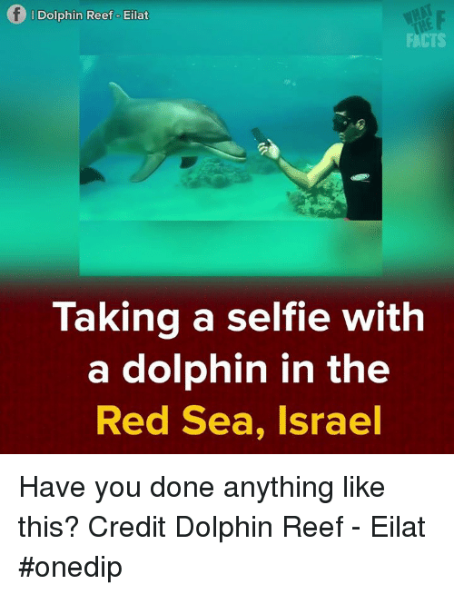Dolphin: Dolphin Reef o Eilat  FACTS  Taking a selfie with  a dolphin in the  Red Sea, Israel Have you done anything like this? Credit Dolphin Reef - Eilat #onedip