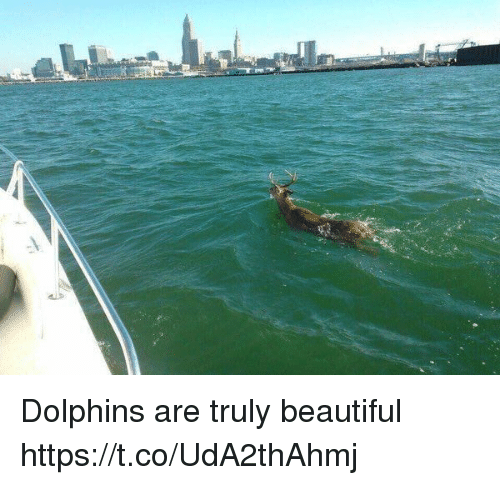 Beautiful, Funny, and Dolphins: Dolphins are truly beautiful https://t.co/UdA2thAhmj