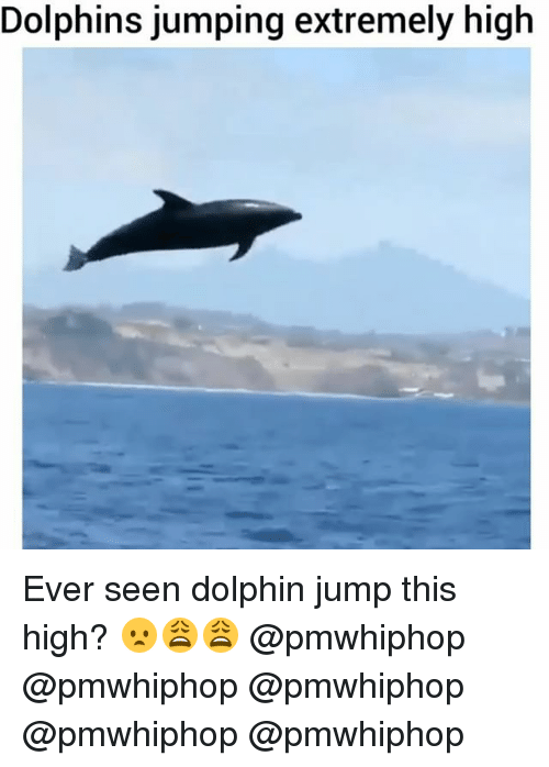 Memes, Dolphin, and Dolphins: Dolphins jumping extremely high Ever seen dolphin jump this high? 😦😩😩 @pmwhiphop @pmwhiphop @pmwhiphop @pmwhiphop @pmwhiphop