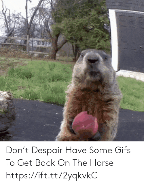 Horse: Don't Despair Have Some Gifs To Get Back On The Horse https://ift.tt/2yqkvkC