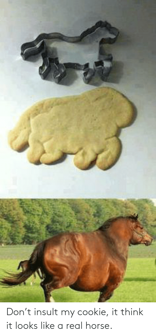 Horse: Don't insult my cookie, it think it looks like a real horse.