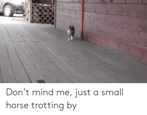 Horse: Don't mind me, just a small horse trotting by