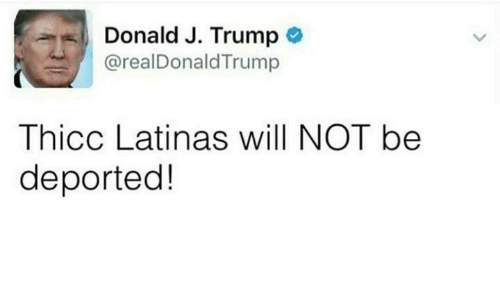 trump donald: Donald J. Trump  Donald J. Trump *  : @realDonaldTrump  Thicc Latinas will NOT be  deported!