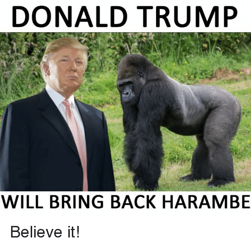 donald trump will bring back harambe believe it 3501020 🔥 25 best memes about harambe, donald trump, and dank memes