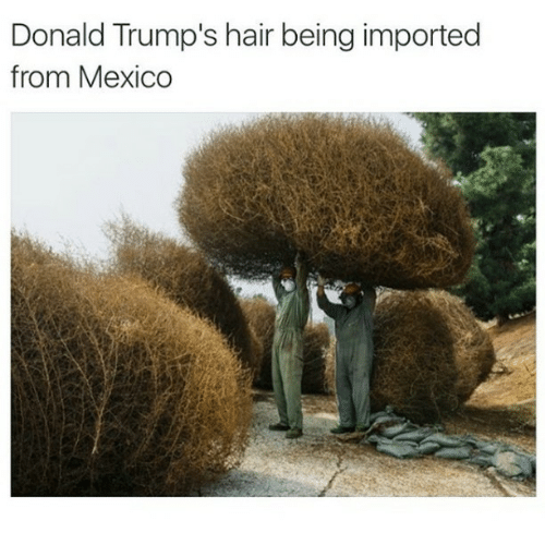 trump hair: Donald Trump's hair being imported  from Mexico