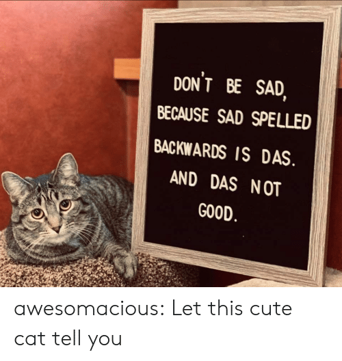 cute cat: DONT BE SAD  BECAUSE SAD SPELLED  BACKWARDS IS DAS  AND DAS NOT  GOOD awesomacious:  Let this cute cat tell you