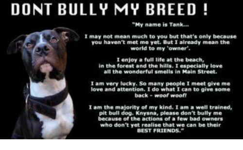 Do Not Complain If The Person You Love Don T Love You Back: DONT BULLY MY BREED My Name Is Tank I May Not Mean Much To