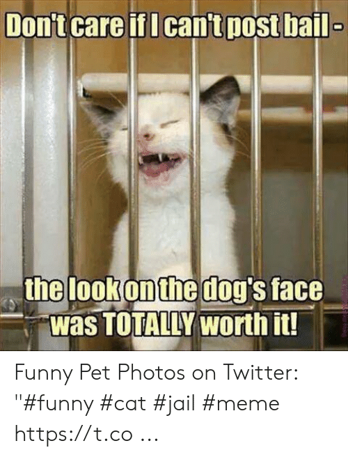 """Jail Meme: Don't care if I cant post bail  the lookonthe dog's face  Was TOTALLY worth it! Funny Pet Photos on Twitter: """"#funny #cat #jail #meme https://t.co ..."""