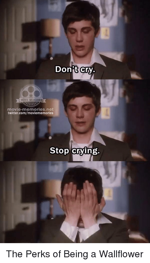 Stop Crying Memes 25+ Best Memes About W...