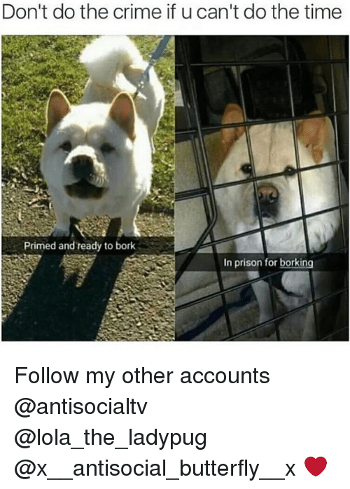 Børk: Don't do the crime if u can't do the time  Primed and ready to bork  In prison for borking Follow my other accounts @antisocialtv @lola_the_ladypug @x__antisocial_butterfly__x ❤️