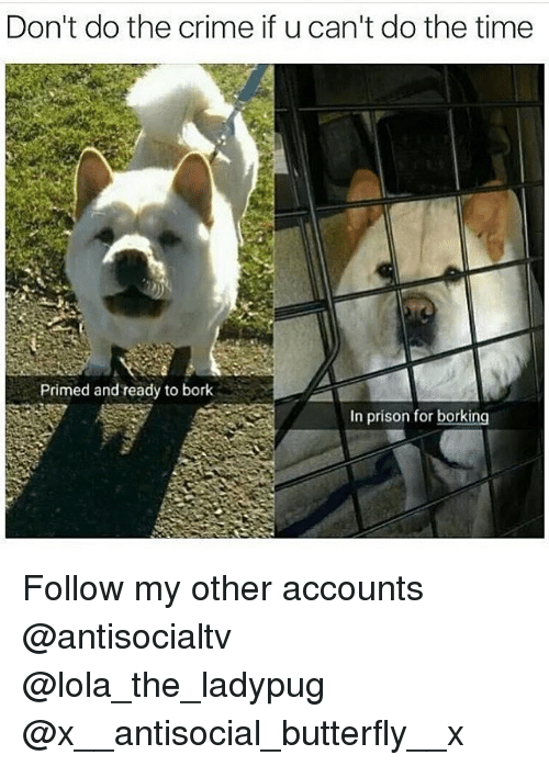 Crime, Memes, and Prison: Don't do the crime if u can't do the time  Primed and ready to bork  In prison for borking Follow my other accounts @antisocialtv @lola_the_ladypug @x__antisocial_butterfly__x