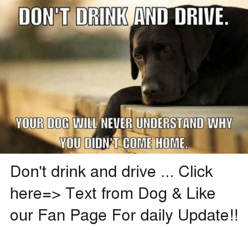 drinking and driving: DONT DRINK AND DRIVE.  YOUR DOG WILL NEVER UNDERSTAND WHY  YOU DIDNPT COME HOME Don't drink and drive ... Click here=> Text from Dog & Like our Fan Page For daily Update!!