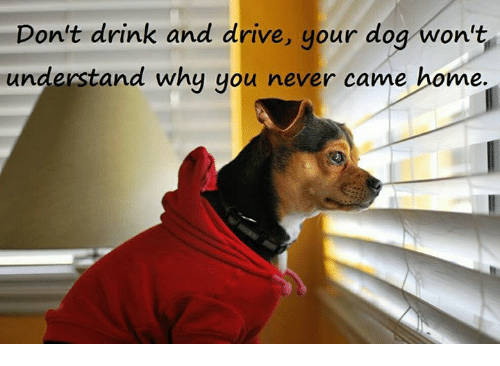 drinking and driving: Don't drink and drive, your dog won't  understand why you never came home