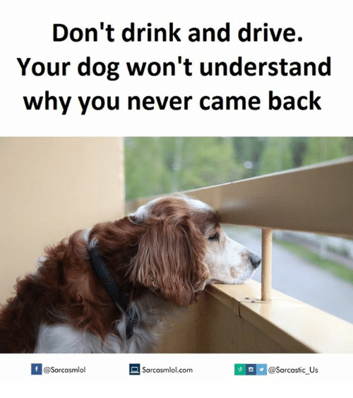 drinking and driving: Don't drink and drive.  Your dog won't understand  why you never came back  A Sarcasmlol.com  M @Sarcastic us  @Sarcasmlol