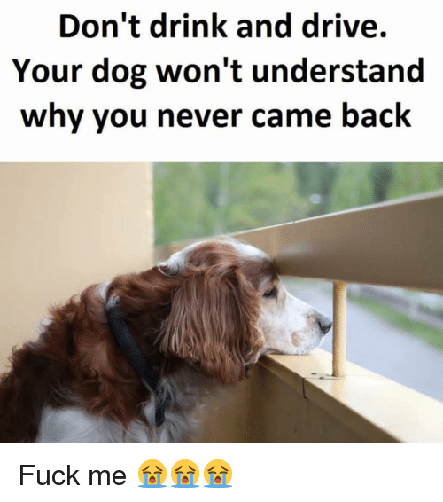Dont Drink And Drive: Don't drink and drive.  Your dog won't understand  why you never came back Fuck me 😭😭😭