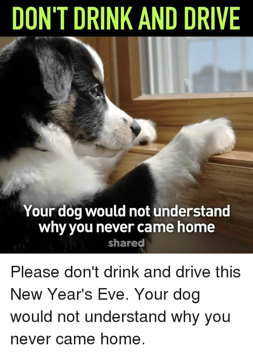 drinking and driving: DON'T DRINK AND DRIVE  Your dog would not understand  why you never came home  shared Please don't drink and drive this New Year's Eve. Your dog would not understand why you never came home.