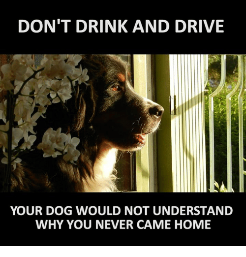 25 best memes about drinking and driving drinking and. Black Bedroom Furniture Sets. Home Design Ideas