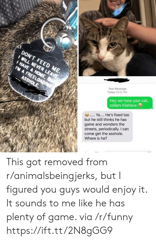 periodically: DON'T FEED ME.  I HAVE A HOME  Text Message  Today 10:51 PM  Hey we have your cat..  collars hilarious  Y. He's fixed too  but he still thinks he has  game and wonders the  streets, periodically. I can  come get the asshole.  Where is he? This got removed from r/animalsbeingjerks, but I figured you guys would enjoy it. It sounds to me like he has plenty of game. via /r/funny https://ift.tt/2N8gGG9