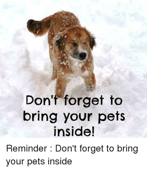 Memes, Pets, and 🤖: Don't forget to  bring your pets  inside! Reminder :  Don't forget to bring your pets inside