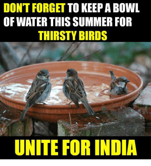 Memes, Thirsty, and Summer: DON'T FORGET  TO KEEP A BOWL  OF WATER THIS SUMMER FOR  THIRSTY BIRDS  UNITE FOR INDIA