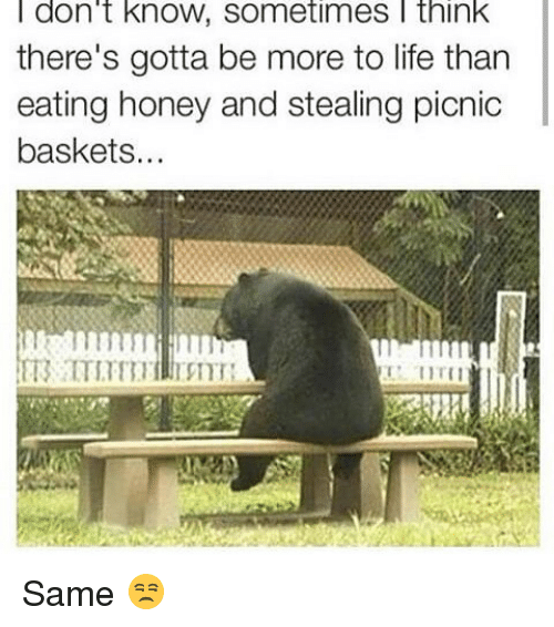 Life: don't knOW, Sometimes think  there's gotta be more to life than  eating honey and stealing picnic  baskets Same 😒