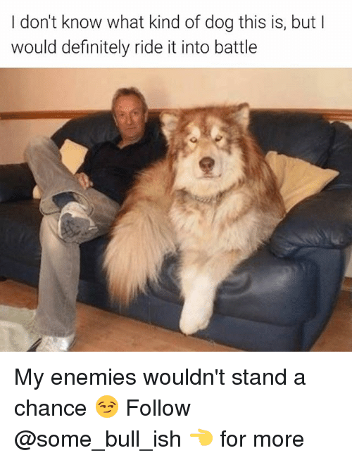 Definitely, Memes, and Enemies: don't know what kind of dog this is, but I  would definitely ride it into battle My enemies wouldn't stand a chance 😏 Follow @some_bull_ish 👈 for more