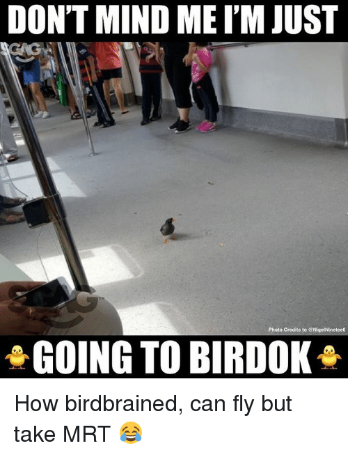 Memes, 🤖, and How: DON'T MIND MEI'M JUST  TH  Photo Credits to NigelNinetee6  GOING TO BIRDOK How birdbrained, can fly but take MRT 😂