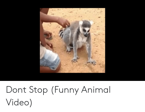 Stop Funny: Dont Stop (Funny Animal Video)