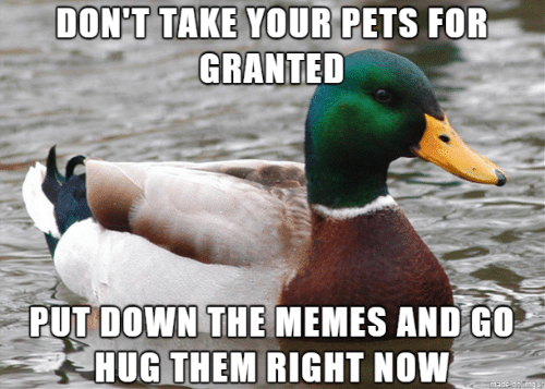 granted: DON'T TAKE YOUR PETS FOR  GRANTED  PUT DOWN THE MEMES AND G0  HUG THEM RIGHT NOW  made on Imgur