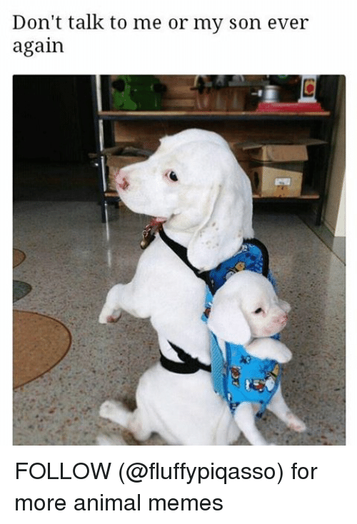 Animals Meme: Don't talk to me or my son ever  again FOLLOW (@fluffypiqasso) for more animal memes