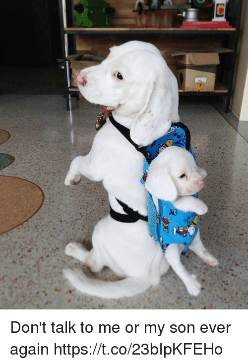 Girl Memes, Me or My Son, and Don't Talk to Me: Don't talk to me or my son ever again https://t.co/23bIpKFEHo