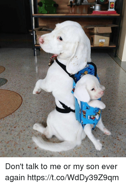 Girl Memes, Me or My Son, and Don't Talk to Me: Don't talk to me or my son ever again https://t.co/WdDy39Z9qm