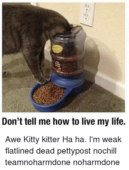 Memes, 🤖, and Donte: Don't tell me how to live my life. Awe Kitty kitter Ha ha. I'm weak flatlined dead pettypost nochill teamnoharmdone noharmdone