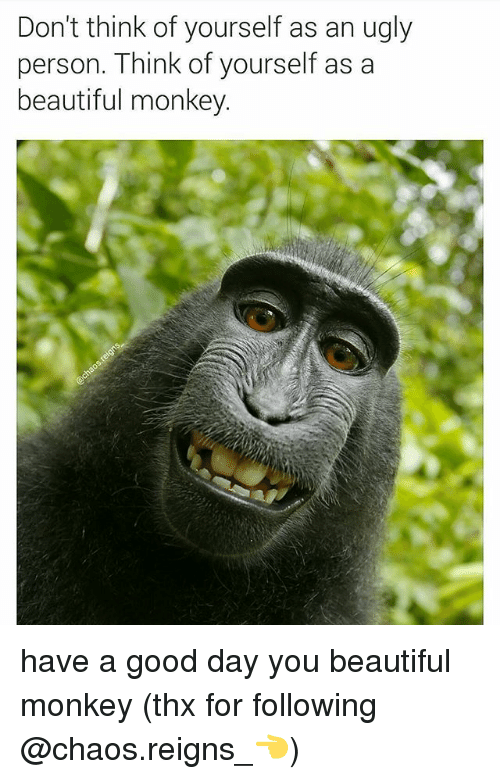 Beautiful, Memes, and Ugly: Don't think of yourself as an ugly  person. Think of yourself as a  beautiful monkey. have a good day you beautiful monkey (thx for following @chaos.reigns_👈)