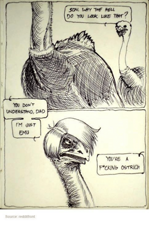 Understandment: DONT  UNDERSTAND, DAD  I'M JUST  EMU  Source: redditfront  saw, tAHY THE HELL  DO YOU Lack LukE TRT?  F*CKlNG OSTRICH
