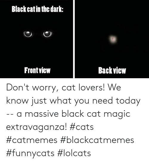 We Know: Don't worry, cat lovers! We know just what you need today -- a massive black cat magic extravaganza! #cats #catmemes #blackcatmemes #funnycats #lolcats