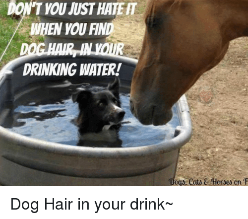 """Drinking, Horses, and Memes: DON'T YOU MUST HATER  DRINKING WATER!  """"Doga, eata C Horses cn T Dog Hair in your drink~"""