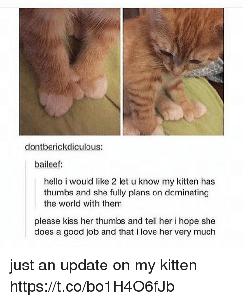 Hello, Love, and Memes: dontberickdiculous:  baileef:  hello i would like 2 let u know my kitten has  thumbs and she fully plans on dominating  the world with them  please kiss her thumbs and tell her i hope she  does a good job and that i love her very much just an update on my kitten https://t.co/bo1H4O6fJb