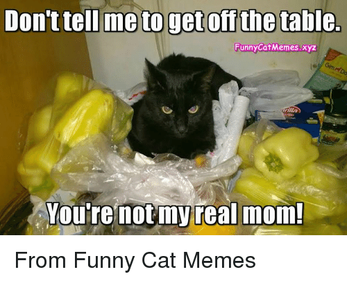 Cat Meme You Re Not My Real Mom