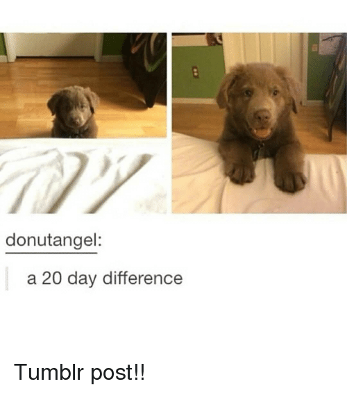 tumblr post: donutangel:  a 20 day difference Tumblr post!!