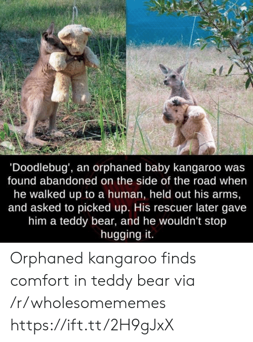 kangaroo: 'Doodlebug', an orphaned baby kangaroo wa:s  found abandoned on the side of the road when  he walked up to a human, held out his arms,  and asked to picked up. His rescuer later gave  him a teddy bear, and he wouldn't stop  hugging it. Orphaned kangaroo finds comfort in teddy bear via /r/wholesomememes https://ift.tt/2H9gJxX