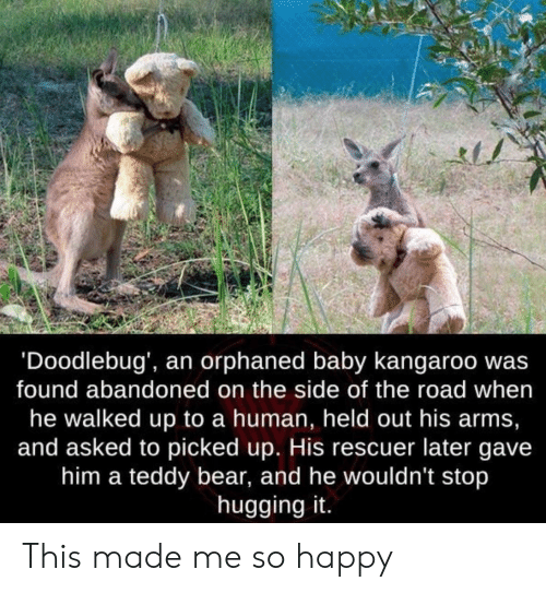 kangaroo: 'Doodlebug', an orphaned baby kangaroo wa:s  found abandoned on the side of the road when  he walked up to a human, held out his arms,  and asked to picked up. His rescuer later gave  him a teddy bear, and he wouldn't stop  hugging it. This made me so happy
