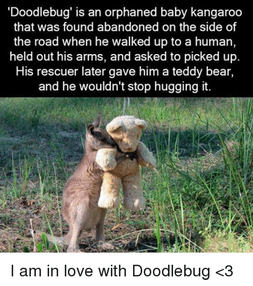 Baby, It's Cold Outside: Doodlebug' is an orphaned baby kangaroo  that was found abandoned on the side of  the road when he walked up to a human,  held out his arms, and asked to picked up.  His rescuer later gave him a teddy bear,  and he wouldn't stop hugging it. I am in love with Doodlebug <3