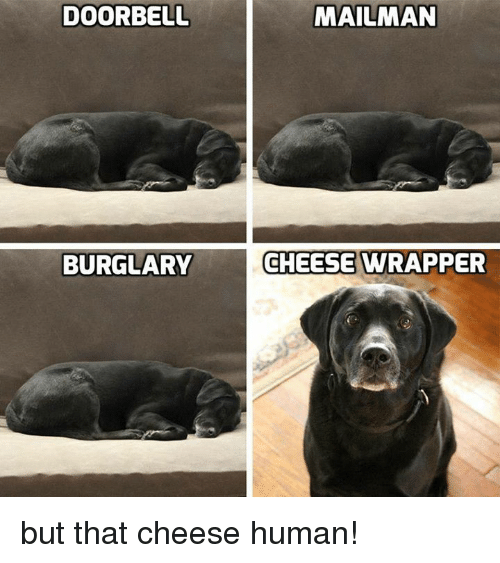 Memes, 🤖, and Human: DOORBELL  BURGLARY  MAILMAN  CHEESE WRAPPER but that cheese human!