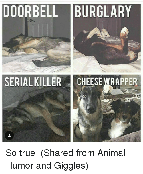 Dank, True, and Animal: DOORBELL BURGLARY  SERIAL KILLER CHEESEWRAPPER So true! (Shared from Animal Humor and Giggles)