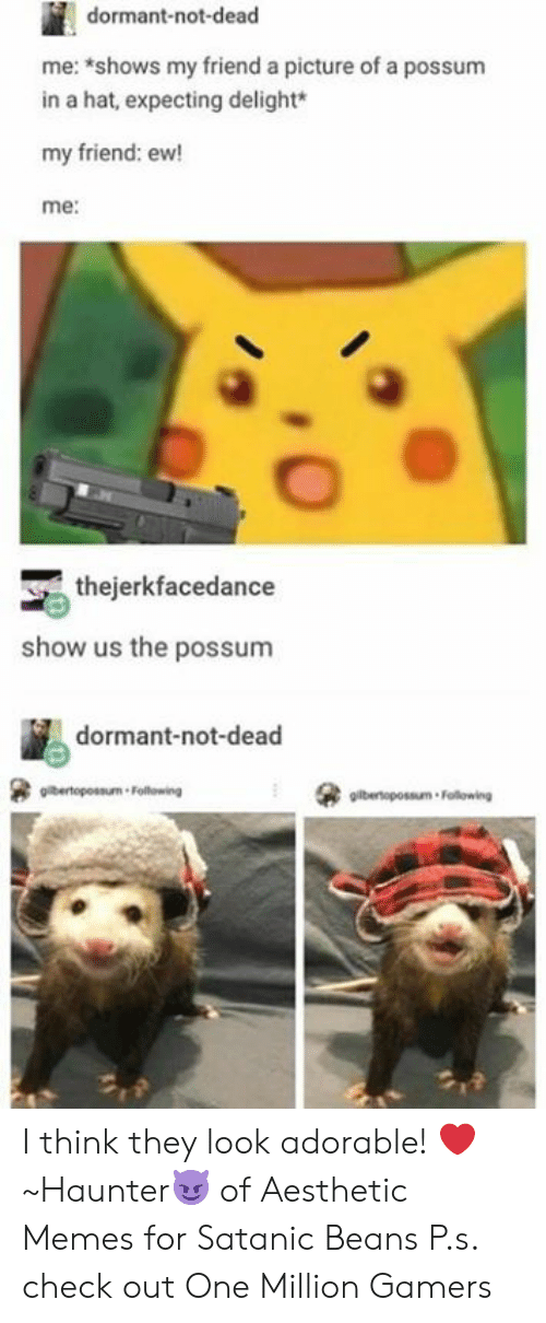 Possum: dormant-not-dead  me: shows my friend a picture of a possum  in a hat, expecting delight*  my friend: ew!  me:  thejerkfacedance  show us the possunm  dormant-not-dead  gilbertopossum Following I think they look adorable! ❤️  ~Haunter😈 of Aesthetic Memes for Satanic Beans  P.s. check out One Million Gamers