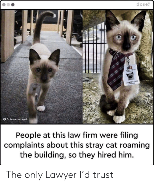Lawyer: dose  LEON ADVOGATO  Dr Jeanette Laredo  People at this law firm were filing  complaints about this stray cat roaming  the building, so they hired him. The only Lawyer I'd trust