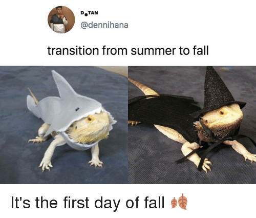 Fall, Memes, and Summer: DoTAN  @dennihana  transition from summer to fall It's the first day of fall 🍂